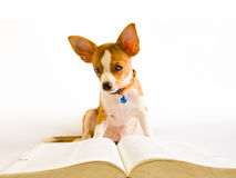 Dog read book Stock Photography