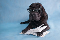 Dog Reading. Serious Black Dog Reading a Book Stock Images