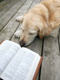 Dog reading Stock Image