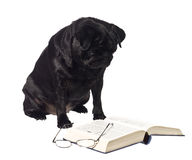 Dog reading a book Stock Photos