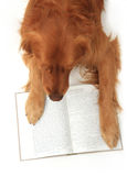 Dog reading a book Stock Images