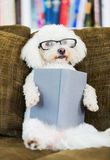 Dog Reading Book Stock Image