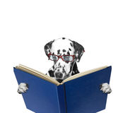 A dog reading a book. A dog with glasses reading a book royalty free stock photos