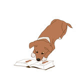 Dog is reading a book Royalty Free Stock Images