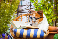 Dog reading a book Stock Photo