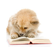 Dog reading a book.  on white background Stock Photography