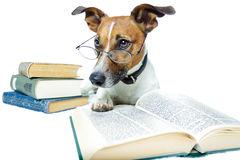 Dog reading books Royalty Free Stock Photos