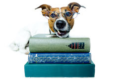 Dog reading books stock photo