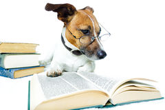 Dog reading books Stock Image