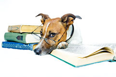 Dog reading books Stock Photography