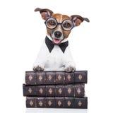 Dog reading books Stock Photo