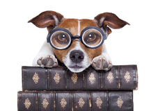 Dog reading books stock photos