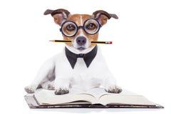 Dog reading books Royalty Free Stock Photo