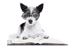 Dog reading books stock images