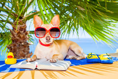 Dog reading Royalty Free Stock Photos