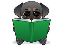 Dog reading a green book Stock Photos