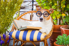 Dog reading Stock Photos