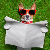 Dog reading newspaper. Dog reading a blank newspaper and relaxing on grass in the park Stock Photos