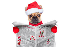 Dog reading newspaper Stock Images