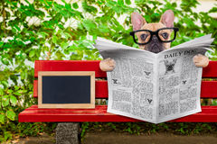 Dog reading newspaper Royalty Free Stock Image