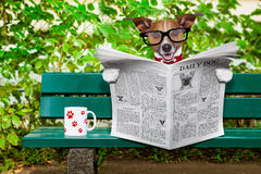 Dog reading newspaper Royalty Free Stock Photography