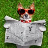 Dog reading newspaper Stock Image