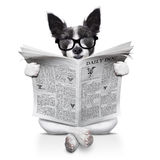 Dog reading newspaper Stock Photography