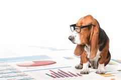 Dog reading. Dog Pets Animal chart diagram exonomics royalty free stock photography