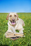 Dog Reading Rules From A Book Royalty Free Stock Image