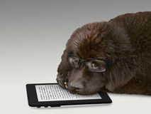 Dog reading tablet Royalty Free Stock Photography