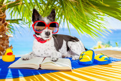 Dog reading. Terrier dog reading a book and relaxing under the palm at the beach , enjoying the summer vacation holidays Stock Photography