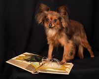 The dog reads the book. Photo of the dog facing the open book royalty free stock photos
