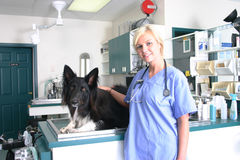 Dog ready for anesthethic Stock Images