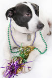 Dog Ready For Party Royalty Free Stock Images