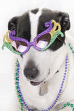 Dog ready for party Stock Photo