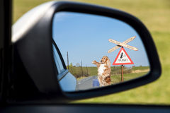Dog ready to make a trip Royalty Free Stock Image