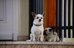 Dog real and fake Royalty Free Stock Photography