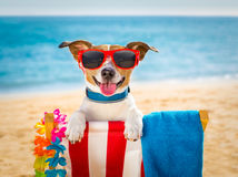Dog realxing on beach chair Royalty Free Stock Photos