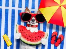 Dog  realxing at the beach Stock Photo