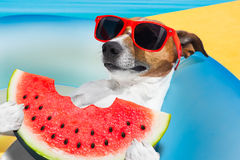 Dog  realxing by the pool Royalty Free Stock Photo