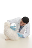 Dog receiving medicine or vaccination Stock Images