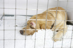 Dog Recovering In Vet's Kennels stock photography
