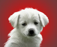 Dog  on red Stock Photos