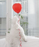Dog with a red balloon Stock Images
