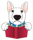 Dog with a red book Royalty Free Stock Images