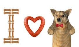 I love the dog royalty free stock photo