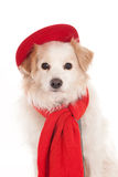 Dog with red cap and scarf Royalty Free Stock Photography