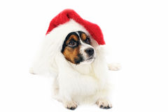 Dog in red Christmas hat Royalty Free Stock Images