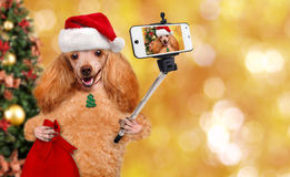 Dog in red Christmas hat taking a selfie together with a smartphone. Royalty Free Stock Images
