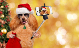 Dog in red Christmas hat taking a selfie together with a smartphone. Stock Photography